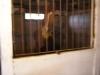 Arab horse care